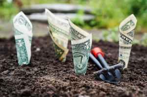 rooting money